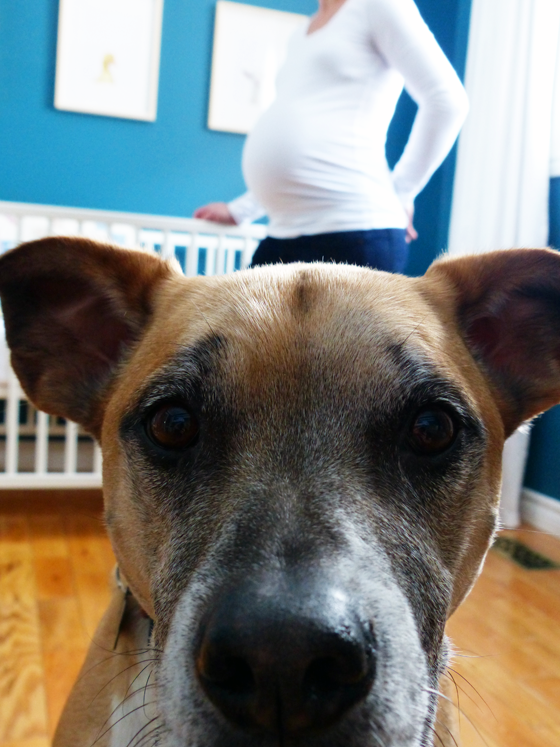 Baxter up close
