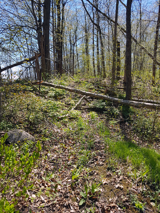 Tree fallen across the trail
