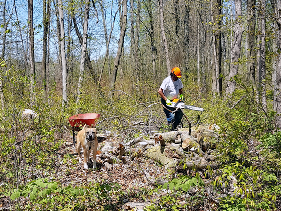 My FIL and Baxter cutting wood in the forest