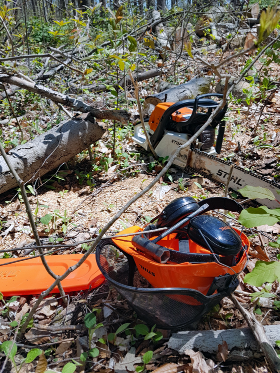 Chainsaw in the woods