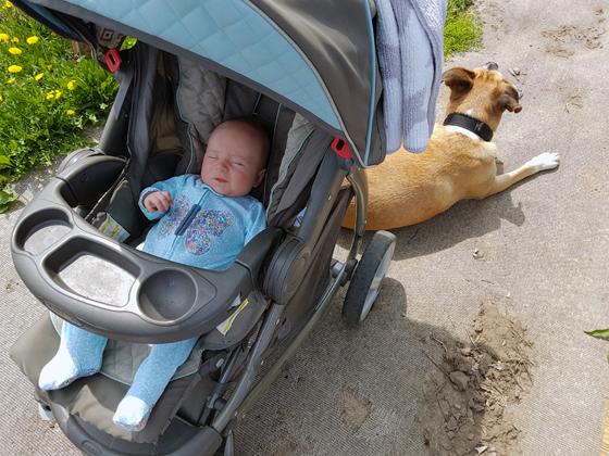 Ellie in her stroller in the garden