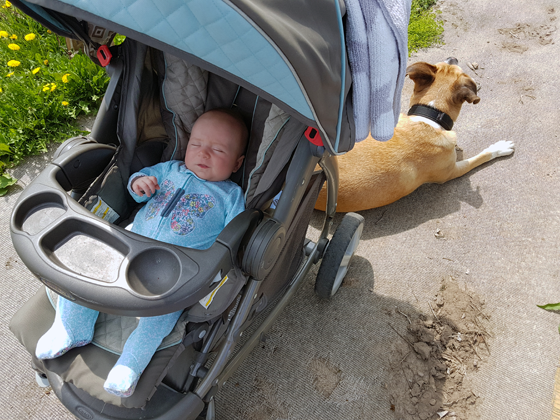 Ellie in her stroller in the garden