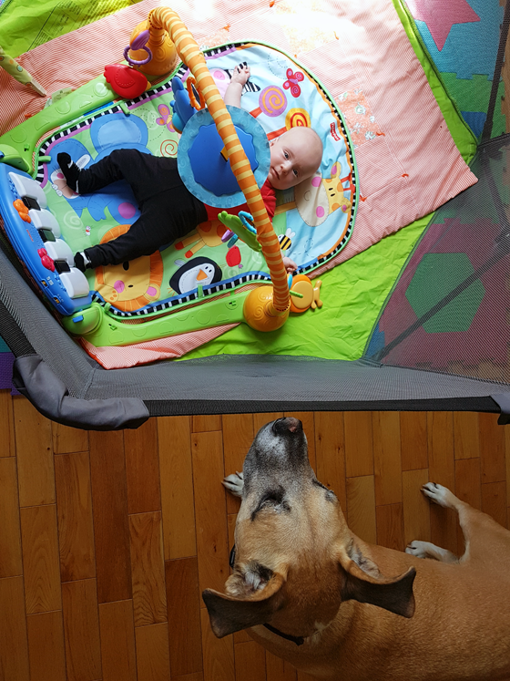 Baxter watching Ellie in the play yard