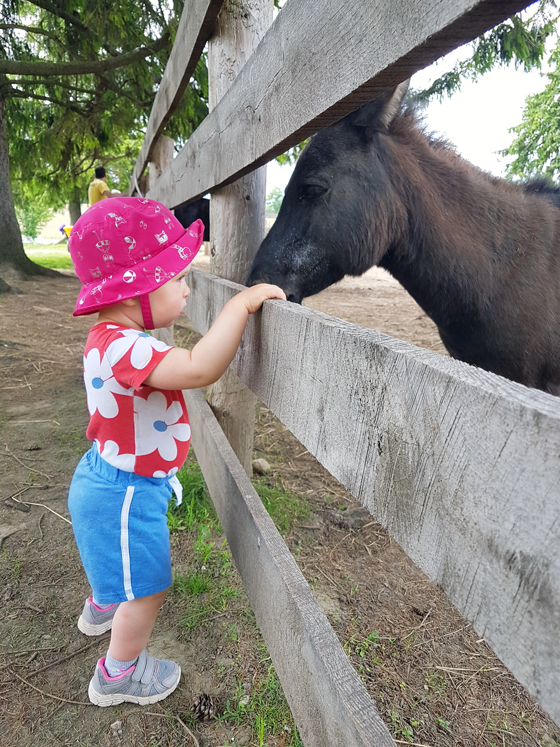 Ellie with a miniature donkey