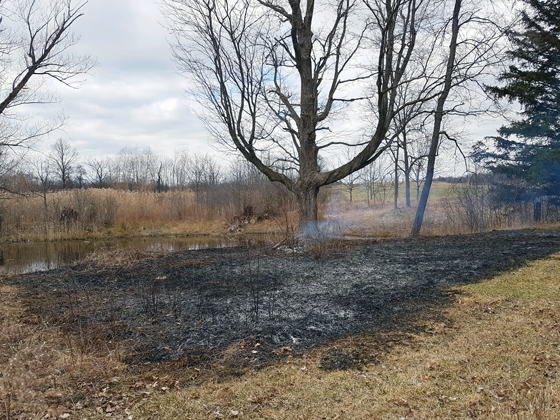 Controlled burn beside the pond
