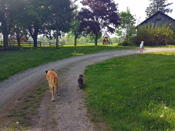 Baxter's last walk with Ralph and Ellie