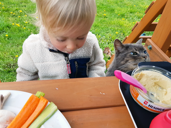 Picnic lunch with the barn cat