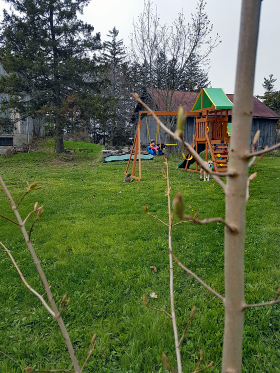 Ellie swinging on her playset with Baxter and Ralph behind the new tree we planted for Mother's Day