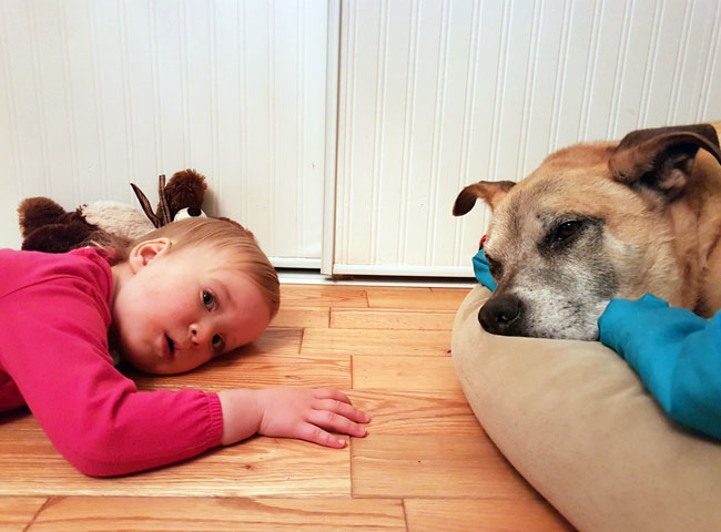 Ellie laying on the floor beside Baxter
