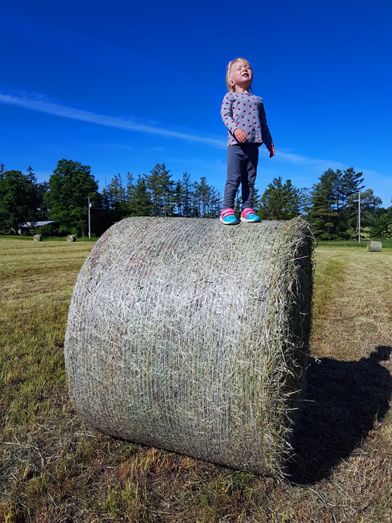 Ellie standing on the hay bale