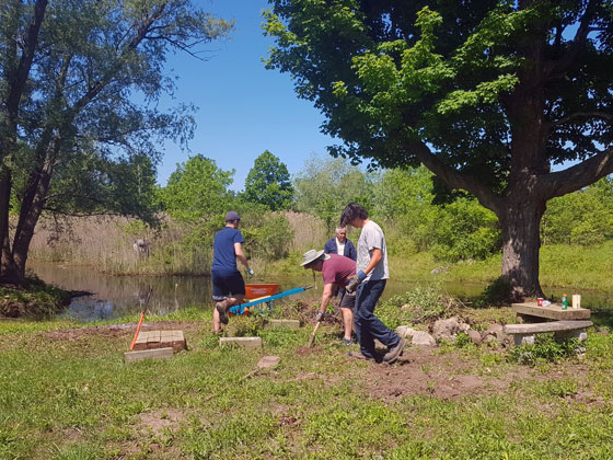 Digging out stumps by the pond