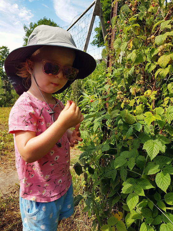 Ellie picking raspberries in the garden