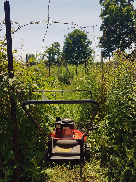 Mowing the vegetable garden